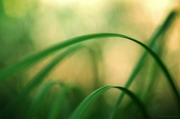 Arches en lumière pastel (magie du Carex n°3)