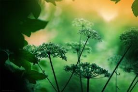 La clairière aux fleurs