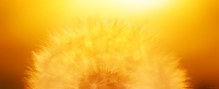 Semances dorees